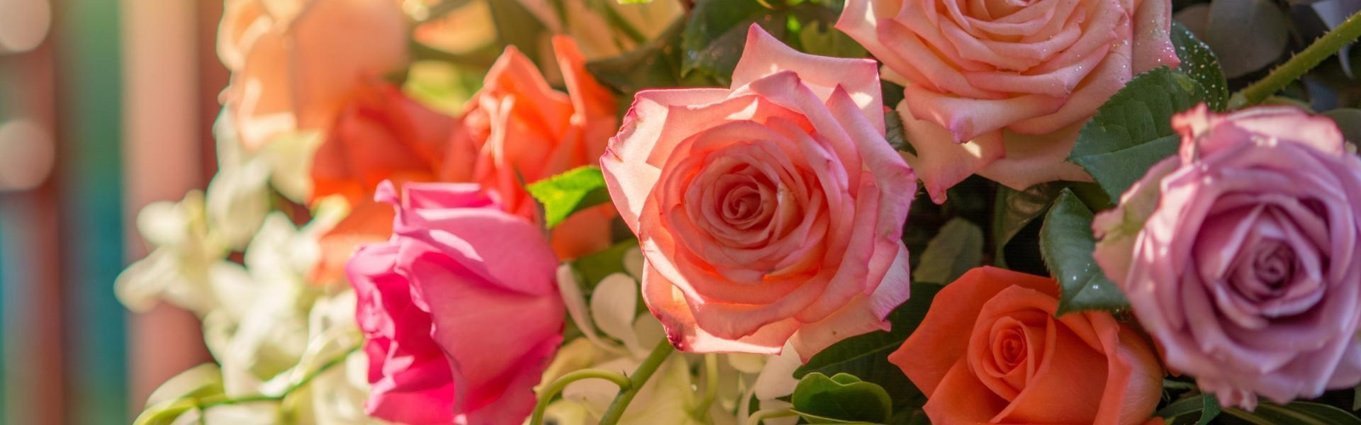 bukiet różnokolorowych róż