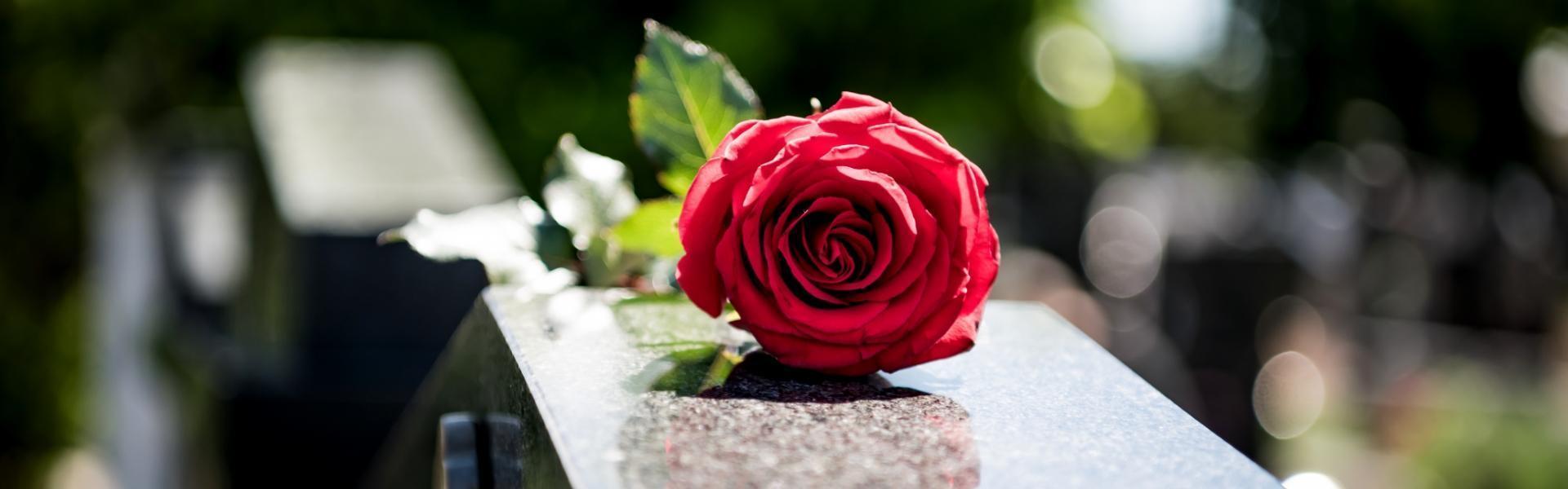 czerwona róża na grobie